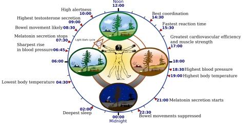 2000px-Biological_clock_human.svg copy